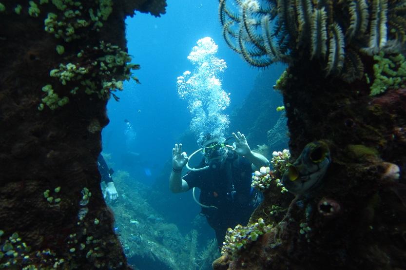 Korálová zahrada