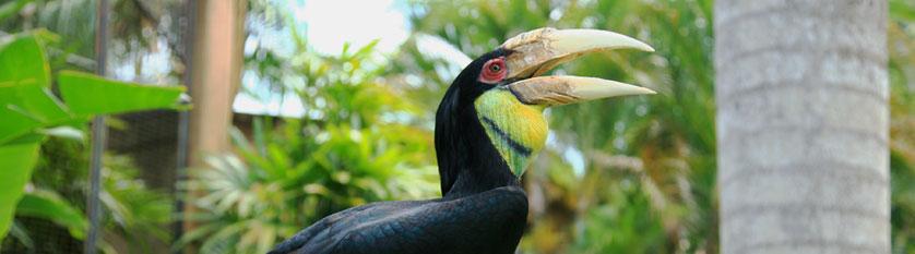 Ptačí park na Bali