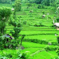 Informace o ostrovu Bali